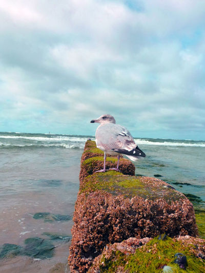 Dove and Water Dove Is Sitting Near Watre Animal Themes Animal Wildlife Animals In The Wild Beauty In Nature Bird Cloud - Sky Day Dove Horizon Over Water Nature No People One Animal Outdoors Perching Sea Seagull Sky Water