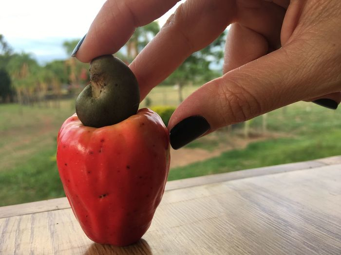 Close-up of hand holding cashew fruit