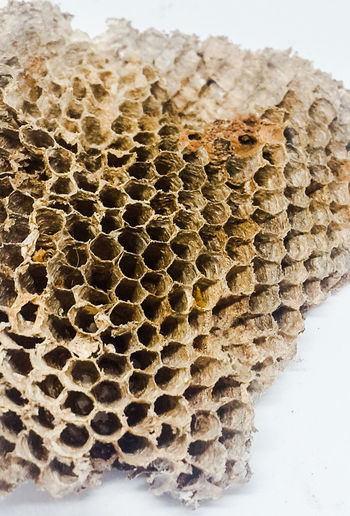 Wasp nest Waspnest Photography Nest Cells Nature Naturelovers Naturebuilding Macro Photography Stockphoto Nature Photography Natural Beauty Macro EyeEm Selects Honeycomb Textured  Close-up Natural Pattern Hexagon Pattern