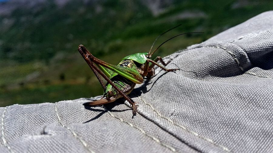 Fine Art Photography Grasshopper Locust On The Hat Hat Insect Photography Green Insect Nature Green Color Grass Mountains Close Up Sunlight