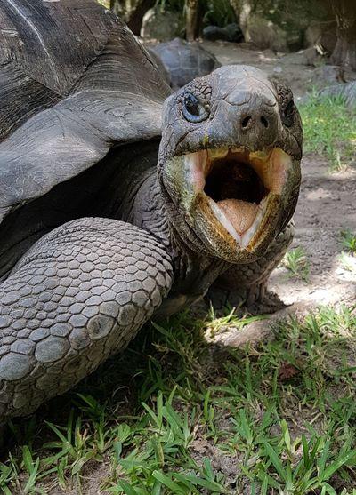 Turtles EyeEm