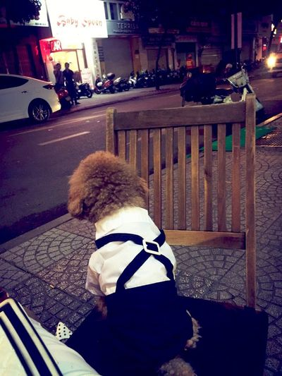 My son Walker Love Black And White Dog Clothes Chair Alone Dog Poddle 🐩 Cute Pets Cute Pet Rear View Real People Childhood Knit Hat Warm Clothing One Person Outdoors Animal Themes