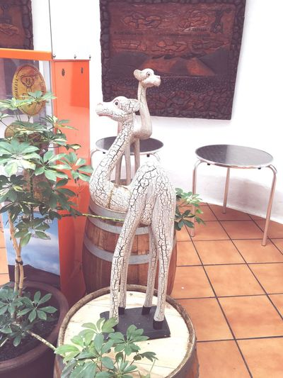 Theseoneslookedcool Lanzarote Island Giftshop