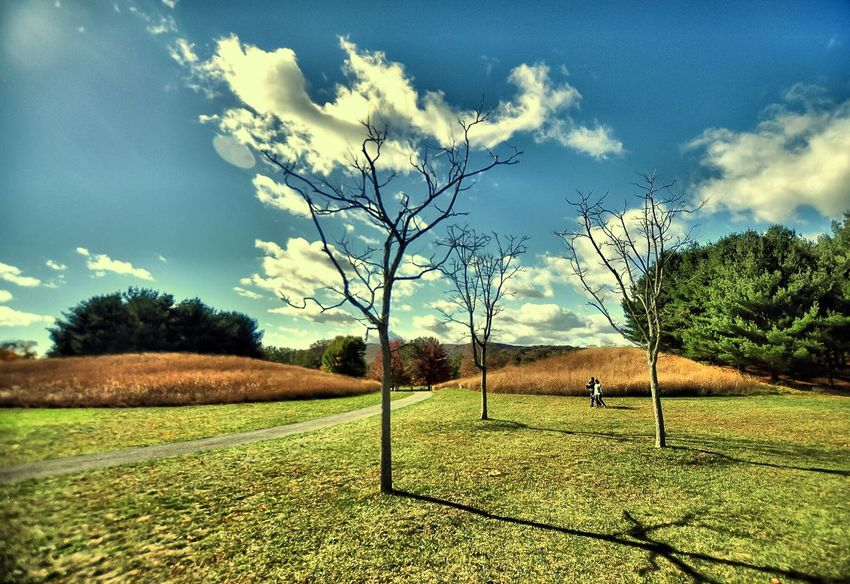 Nature Tranquil Scene Autumn Autumn Colors Landscape Beauty In Nature Cloud - Sky Outdoors Scenics No People Day Sky Field Tree Morning Light Light And Shadow Wide Shot Tranquility EyeEm Nature Lover Grass Growth Fall Storm King Arts Center , Cornwall, NY Change Nature