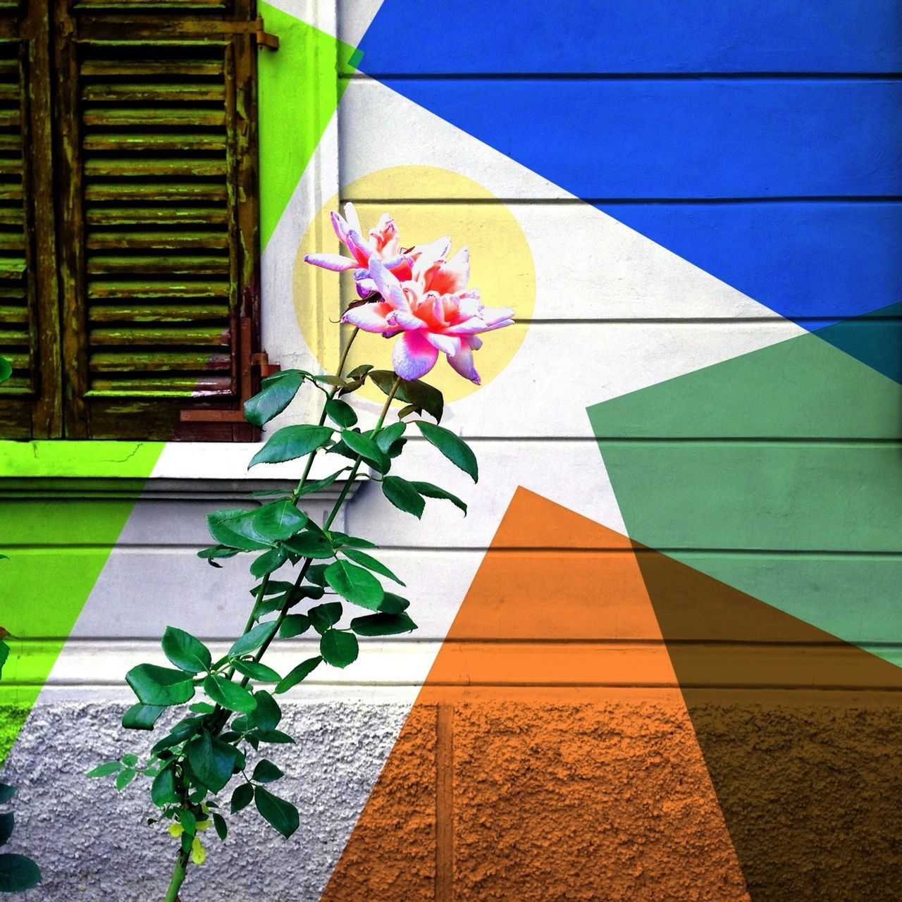 growth, multi colored, leaf, window, plant, no people, green color, architecture, nature, built structure, day, outdoors, close-up