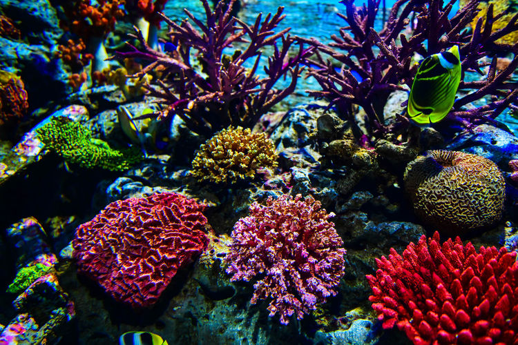 Colorful with corals in a marine aquarium Aquarium Aquatic Scuba Diving Animal Animal Themes Animal Wildlife Animals In The Wild Beauty In Nature Close-up Colorful Coral Coral Reef Corals Ecosystem  Marine Marine Life Nature Outdoors Reef Sea Sea Life UnderSea Underwater Underwater Sea Water