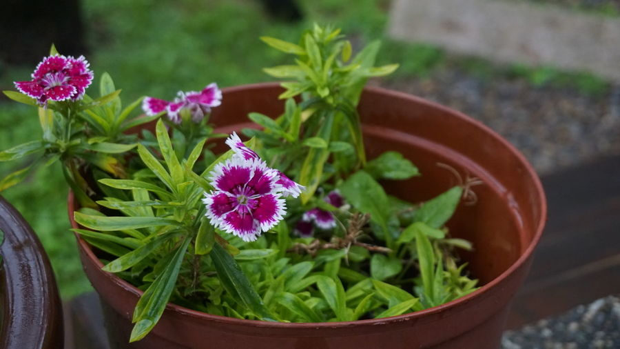 bunga Flower