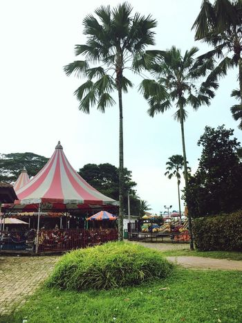 Tree Arts Culture And Entertainment Palm Tree Sky No People Outdoors Nature Day Gazebo Funfair Streetphotography