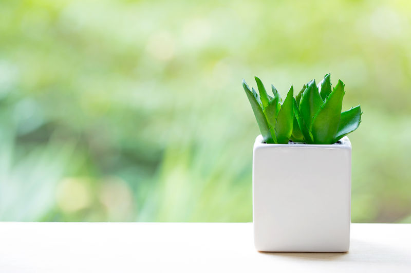 Blank Close-up Copy Space Day Focus On Foreground Food Food And Drink Freshness Green Color Growth Herb Leaf Nature No People Outdoors Plant Purity Selective Focus Simplicity Succulent Plant Table Wellbeing