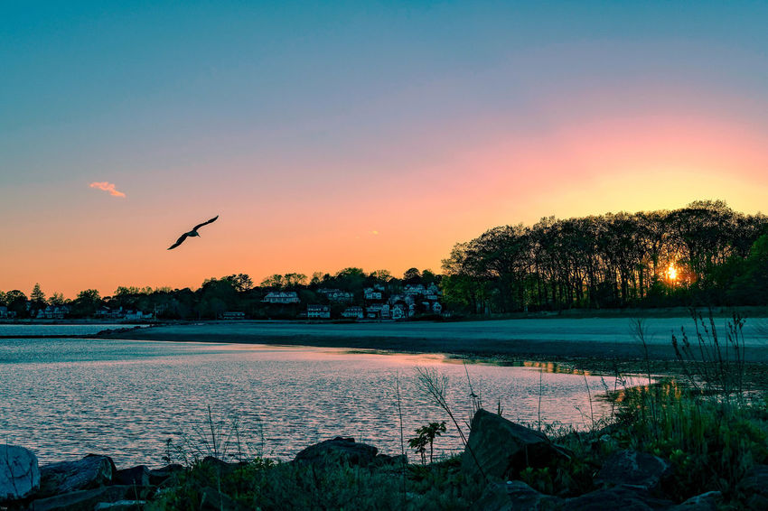 Seagull Sunset Bird Flying Water Sunset Clear Sky Spread Wings Flock Of Birds Tree Seagull Calm Agricultural Field Horizon Over Water Shore