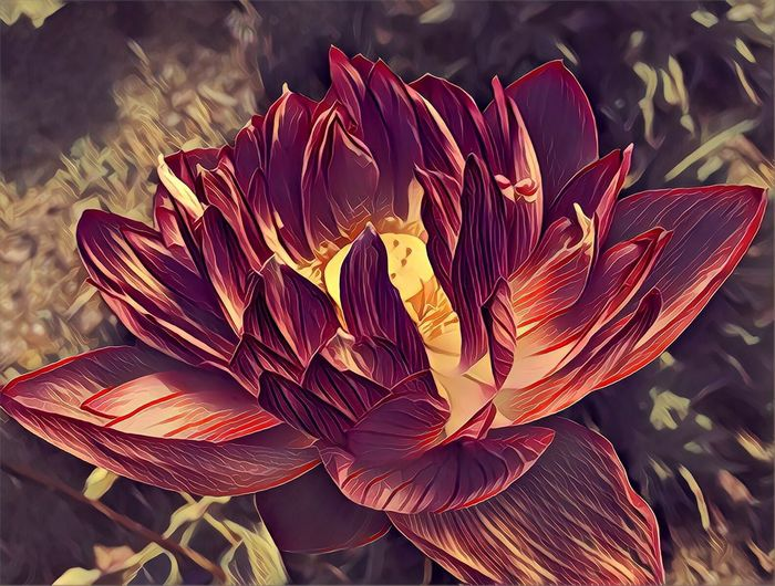 Lotus Lotus Art