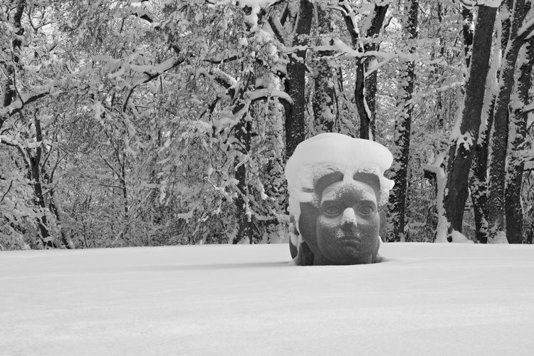 snow covered stone sculpture Art B&w, Forest, Sculpture, Snow, Snow Covered Trees, Stone Head, Tree, Trees, Winter, Wood Buddha Carving - Craft Product Close-up Covering Creativity Day Nature No People Outdoors Sculpture Statue Tranquility Tree Tree Trunk Weather White White Color