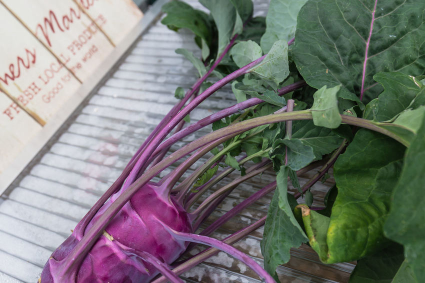 Fresh Kohlrabi for lunch. Blue Kohlrabi Close-up Day Food Food And Drink Freshness Green Color Growth Harvest Healthy Eating High Angle View Kohlrabi Leaf Nature No People Nusshain 06 17 Outdoors Plant Vegetable