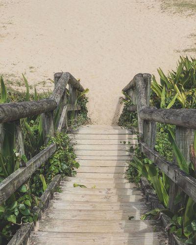 Wooden Boardwalk Leading Towards Plants