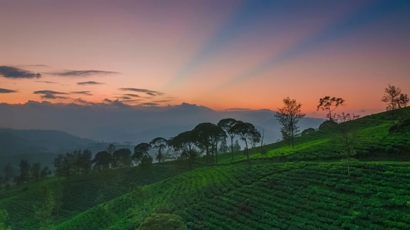 summer is a sunrise time.. Sunrise shot in Cukul, Pangalengan, West Java, Indonesia Cukul Pangalengan West Java  INDONESIA Landscape Nature Ray Of Light R.o.l Sunrise EyeEm Best Shots EyeEm Nature Lover EyeEmBestPics Athmosphere Tree Rural Scene Multi Colored Tea Crop Beauty Forest Fog Dawn Agriculture Terraced Field Valley Dramatic Sky Atmospheric Mood Moody Sky Romantic Sky Mountain Range Mountain Peak EyeEmNewHere Summer Exploratorium