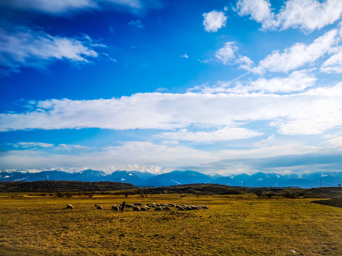 Mountain American Bison Agriculture Grazing Rural Scene Group Of Animals Farm Sky Animal Themes Landscape The Great Outdoors - 2019 EyeEm Awards The Mobile Photographer - 2019 EyeEm Awards My Best Photo