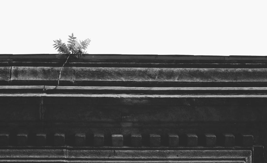 Black & White Budapest Hungary Nature On Your Doorstep Nature Photography Blackandwhite Bnw_captures Bnw_collection Bnw_life Bnw_society Bw_collection Bw_lover Flower Monochrome Monotone Nature_collection Naturelovers Urbex Urbex_rebels Urbexphotography