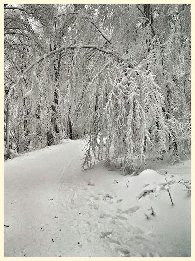 Hoherodskopf Schnee *-* Winter Wonderland