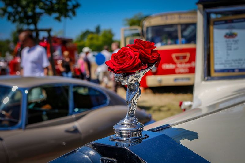 Rolls Royce Ghost Rolls Royce Emily Spirit Of Ecstasy Flower Focus On Foreground Flowering Plant Nature Mode Of Transportation Transportation Plant A New Beginning