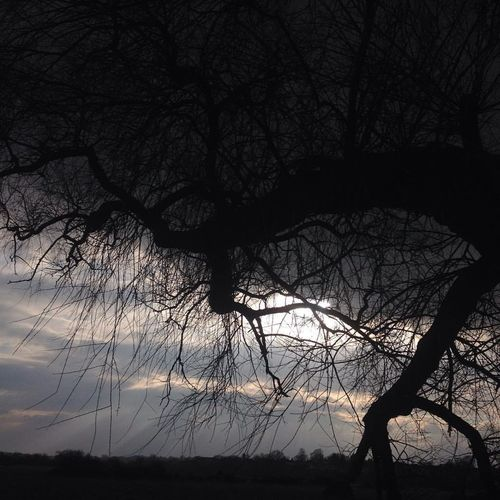 Tree Branches Tree Trunk Bare Tree Beauty In Nature Branch Branches Silhouetted Horizon Sky Tree Landscape Nature Night No People Outdoors Scenics Silhouette Sky Sky Through Bare Branches Sunset Tranquil Scene Tranquility Tree