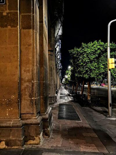 De noche Tree