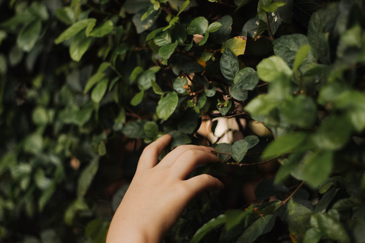 human hand body part touching leafs Close-up Day EyeEm Best Shots EyeEm Nature Lover Fingers Freshness Growth Holding Human Body Part Human Finger Human Hand Leaf Nature One Person Outdoors People Plant Real People Touching Tree