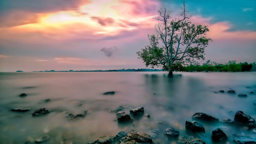 Myself. Huawei Huaweimobile Huaweimate20pro Water Sunset Tree Lake Pink Color Reflection Pastel Colored Blue Sunlight Sky