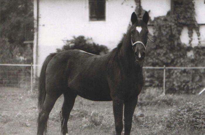 Filmphotography Vintage Film Photography PrakticaLTL Filmisnotdead Pets Pet Photography  Horse Blackandwhite