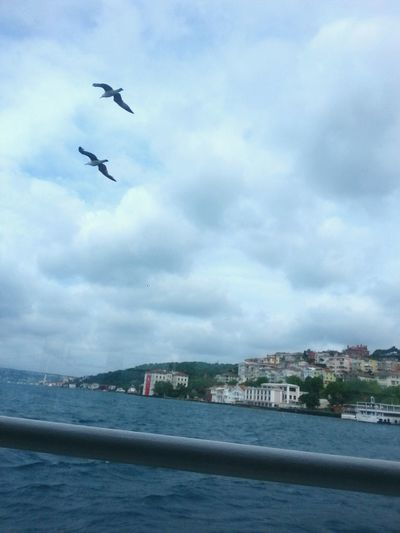 Flying BirdNo People Istanbul - Bosphorus Travelingtheworld  Good Times Travelingtheworld  Photography Travelling Photography EyeEm Gallery Travel Destination Eye4photography  Enjoying Life Hallo World Travel Photography Eyeem Photography ıstanbul, Turkey Outdoors Istanbullife Marmara Denizi