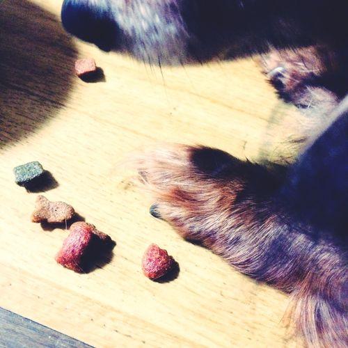 Ilovemydog Dog Mypet Dachshund