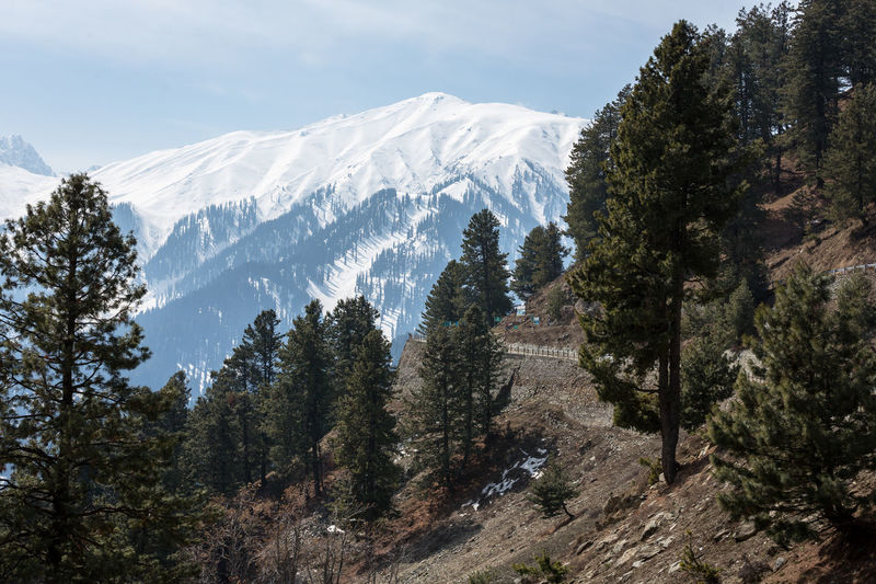 The route to Sonamarg Peak, India Beautiful Kashmir Mountain View Pine Forest Pine Forests Plant Scenery Shots Winter Forest Glacier Landscape Sky Snow Sonamarg