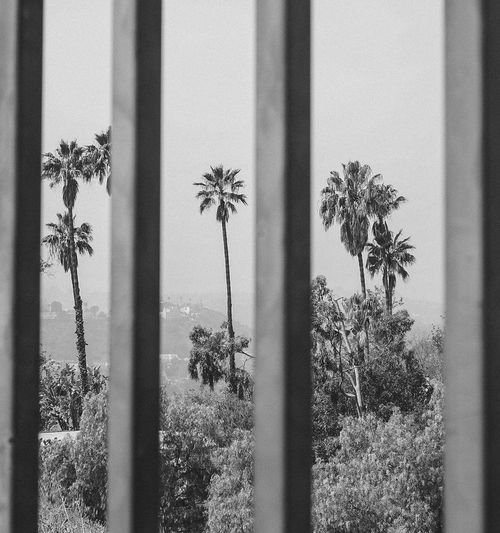 Palm Tree Nature Day Blackandwhite Hollywood Losangeles Hills