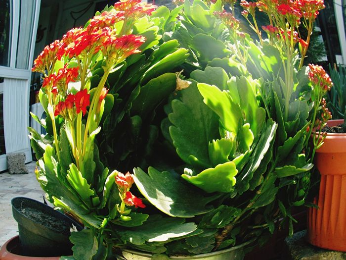 Flower Green Color Growth Plant Nature Freshness Fragility Beauty In Nature Sunlight Leaf Day No People Close-up Flower Head Outdoors Cactus