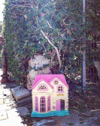 House against plants