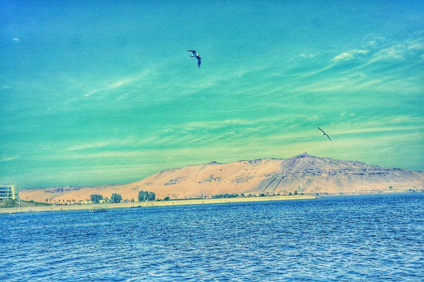 Flying Sky Sea Bird Day Outdoors Nature Beauty In Nature Landscape Aswan, Egypt Aswan ♥♥ The Land Of Beauty My Egypt Resolution This Is Egypt ❤ Tranquility Natural Pattern Vacations Travel Tourism Couple Of Birds Travel Destinations Beauty In Nature Mid-air Nature Cloud - Sky