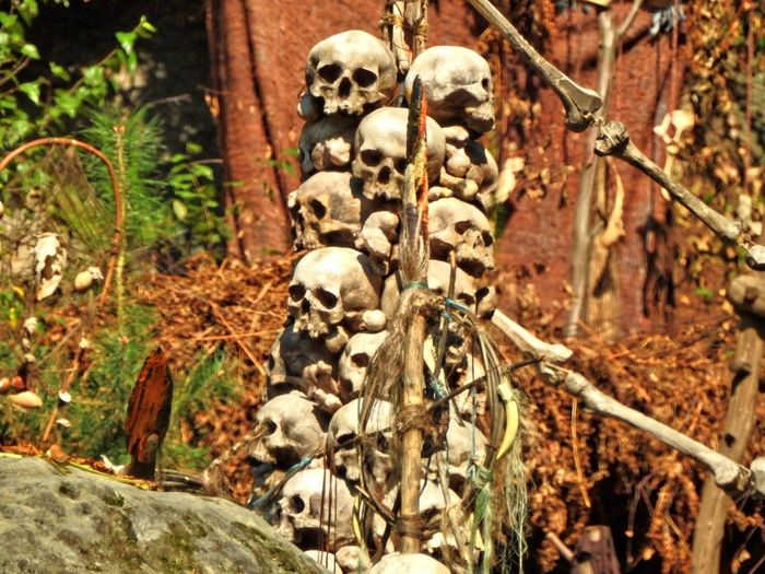 Branch Brown Close-up Day Focus On Foreground Fragility Human Skull Lebka Lebky Lidské Lebky Nature No People Outdoors Plant Skull Skulls Tranquility Tree Trunk Uncultivated WoodLand