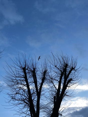 Low Angle View Bare Tree Sky Nature Silhouette Tree No People