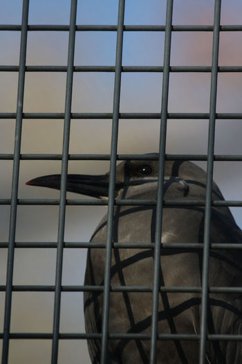 Bars Behind Bars Bird Cage Close-up Day Grounded Hoping For A Better Life Hoping For Better Days Hoping For Freedom Life Sentence Locked Locked In No People Sad Sad & Lonely Watching