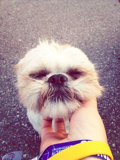 Dog Holidays 😉