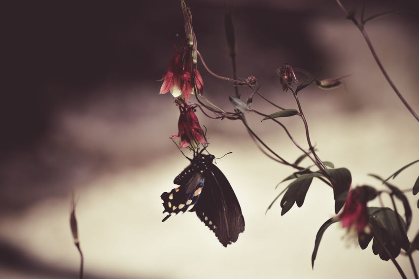 Beauty In Nature Butterfly Elegant Elégance Flowers Nature