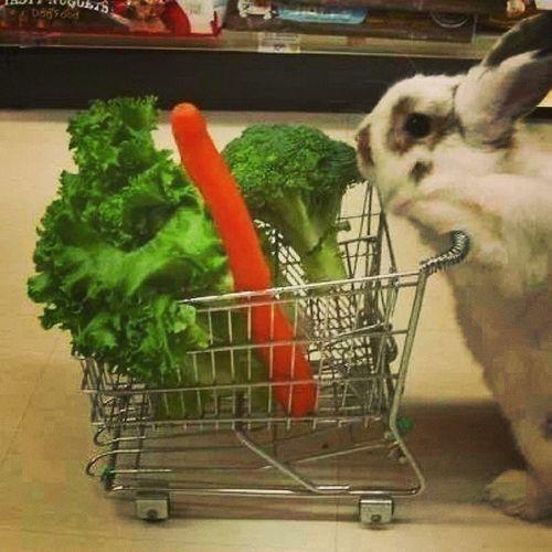Migros Tansaş Pazar Alışveriş shopping tesco waitrose eataly rabbit animal nature save recycle keep green eat vegetable