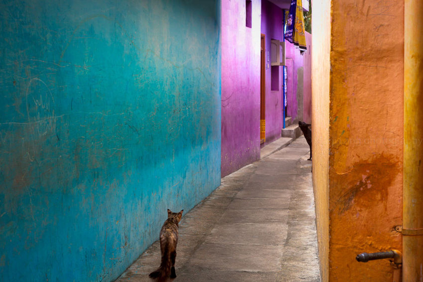 Alley Animals Building Exterior Cat Colorful Colors Composition Diminishing Perspective Dog Marji Lang Photography Narrow No People Street Street Photography Streetphotography The Way Forward Walkway Wall Wall - Building Feature The Street Photographer - 2016 EyeEm Awards