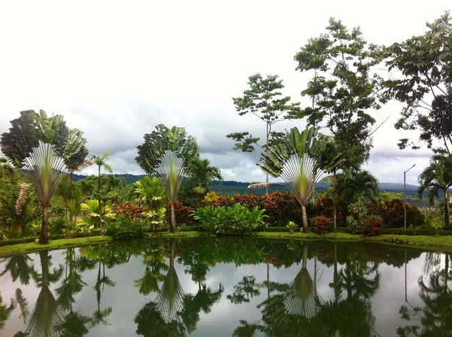 Costa Rica Fortuna Landscape Nature Palm Reflection Tree Water