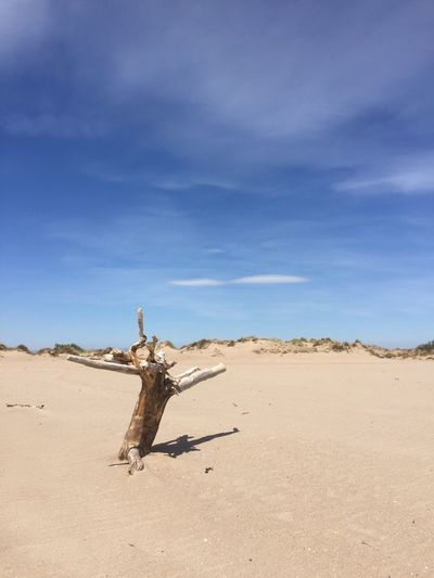Dead Tree In Desert Against Sky