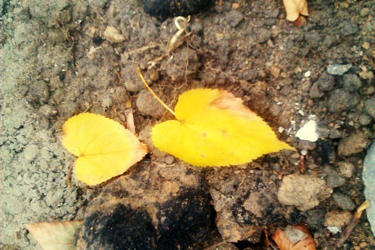 желтый лист осень фон