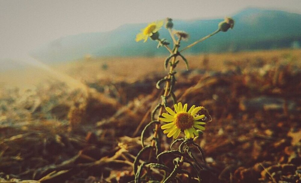 EyeEmNewHere Nature Urban Skyline Cityscape Yellow Beauty In Nature Petal First Eyeem Photo Break The Mold Flower Freshness Outdoors No People Fragility Close-up Flower Head Nature Day Plant Sky