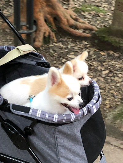 Just rocking the doggos Pets Relaxation No People Stroller