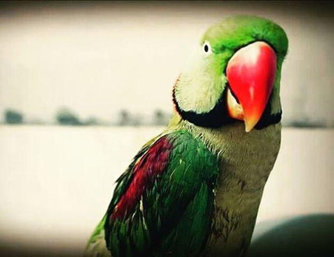 Unitedforcare Lovelybird 🐦🐦