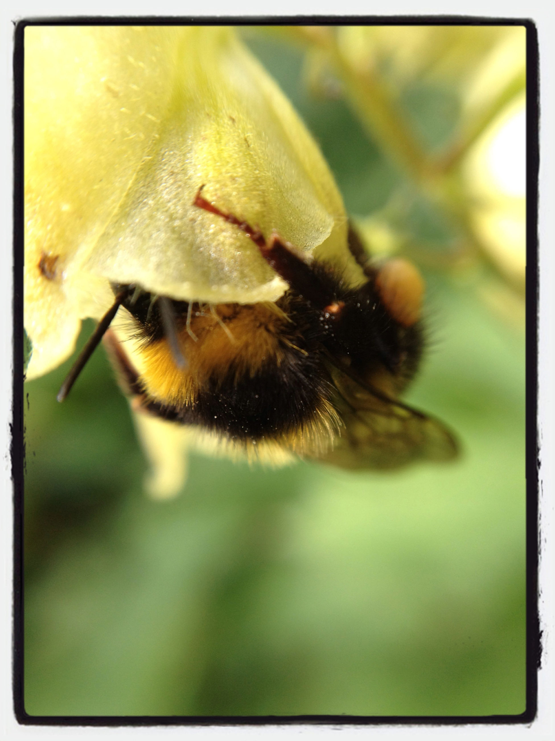 animal themes, one animal, animals in the wild, wildlife, insect, transfer print, close-up, auto post production filter, flower, focus on foreground, selective focus, bee, nature, plant, growth, day, beauty in nature, fragility, outdoors, pollination