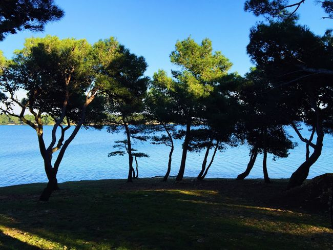 Bunch by the sea, Medulin bay, Croatia, 2015. Medulin Croatia Sea Water Bay Seaside Seascape Sealine Landscape Nature Nature Photography Tree Treehugger Tree Hugger Pine Pine Trees Pine Tree Shadow Grass Beach Life Beach Shade Beach Shades Beach Shore Beauty In Nature